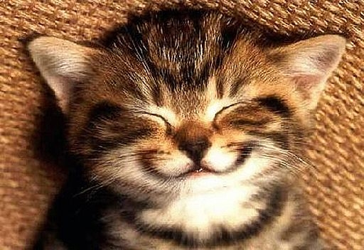 Kitty smile
