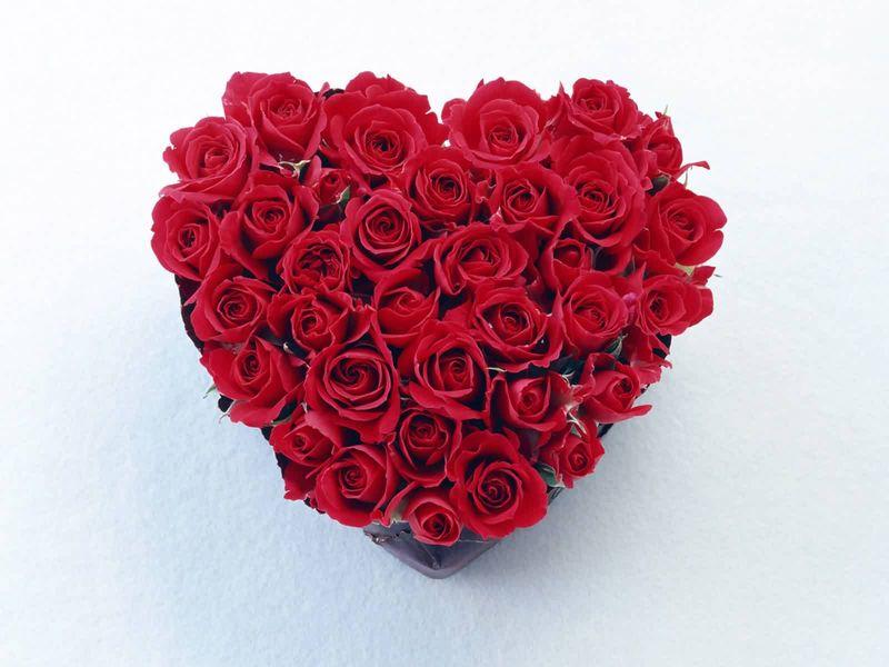 Free_wallpaper_of_roses