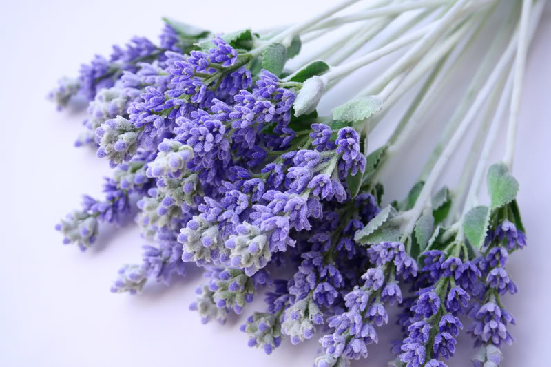 sheer goddess skin care the many benefits of lavender, Natural flower